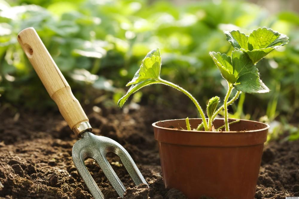 Consejos para principiantes de la jardinería en casa