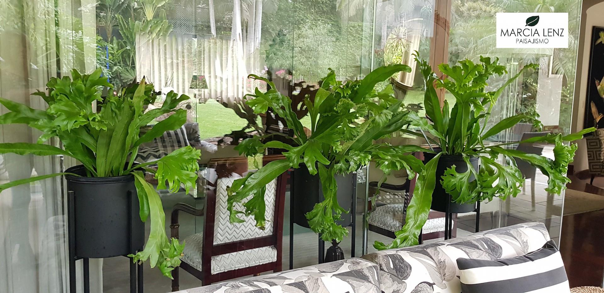 La invasión del verde dentro de la casa.